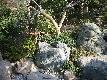 popup_441_441_GALLERY